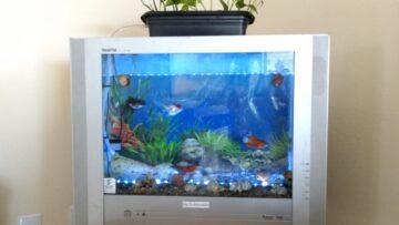 Sistema de aquaponia em aquário sustentável