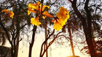 Dourado Como A Luz Do Dia